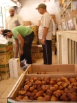Wholesale Market for Fresh Dates in Medina